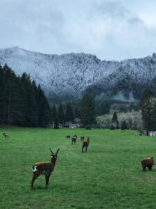 3D Deer target